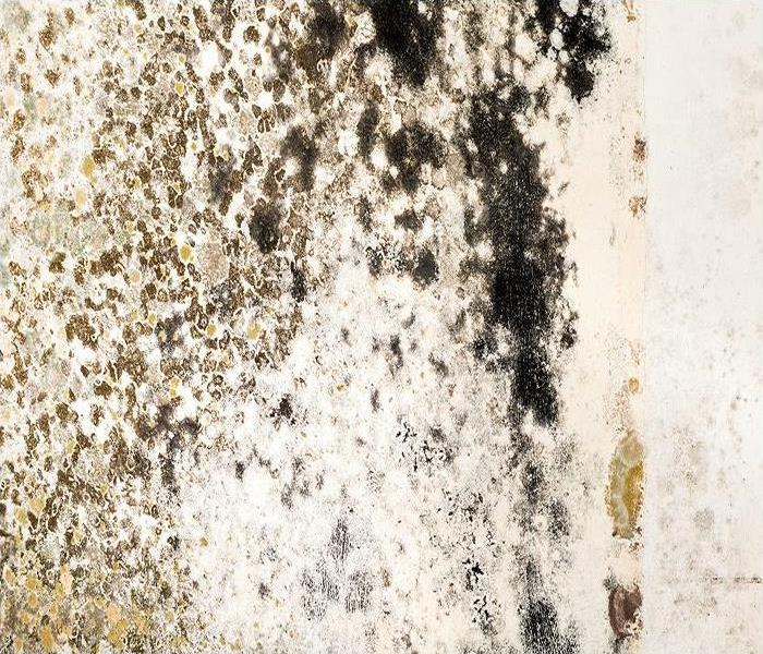 Mold Remediation How Mold Can Harm The Unprepared In Marina Del Ray