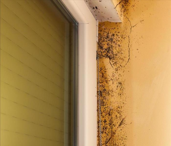 Mold Remediation Mold Damage Remediation in Los Angeles Involves Several Steps