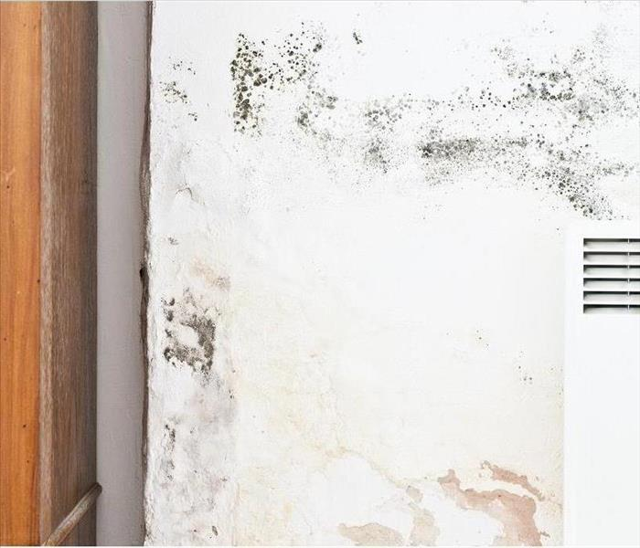 Mold Remediation Mold Damage in West Los Angeles - Why Detergent is Not Enough