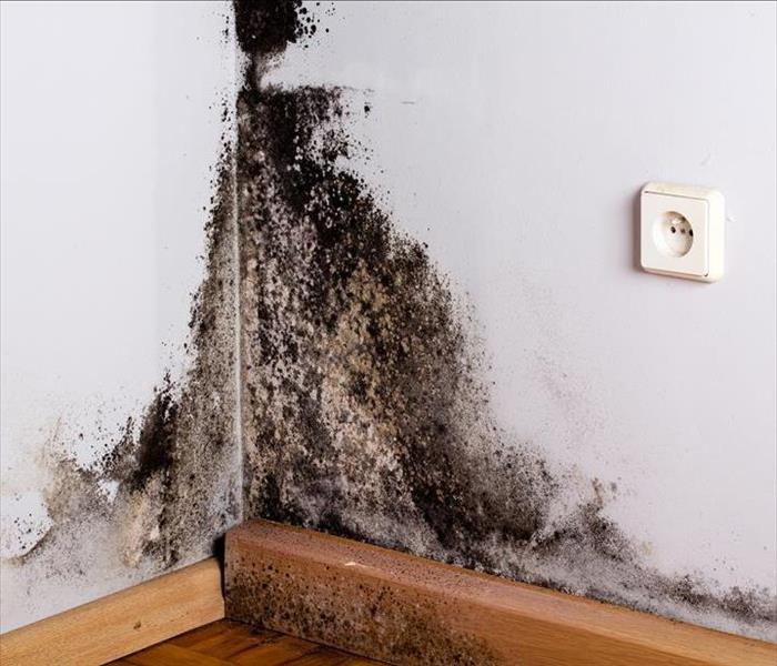 Mold Remediation Professional Procedures for Mold Remediation in Marina Del Rey