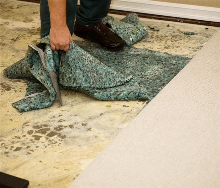 Mold Remediation Why Did Mold Damage Take Root in My Marina Del Rey Home?