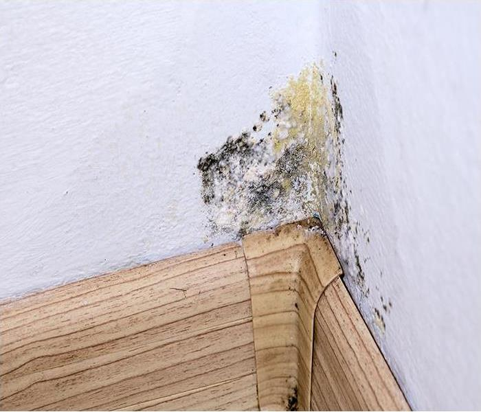 Mold Remediation Cleaning And Removing Mold Damage In West Los Angeles