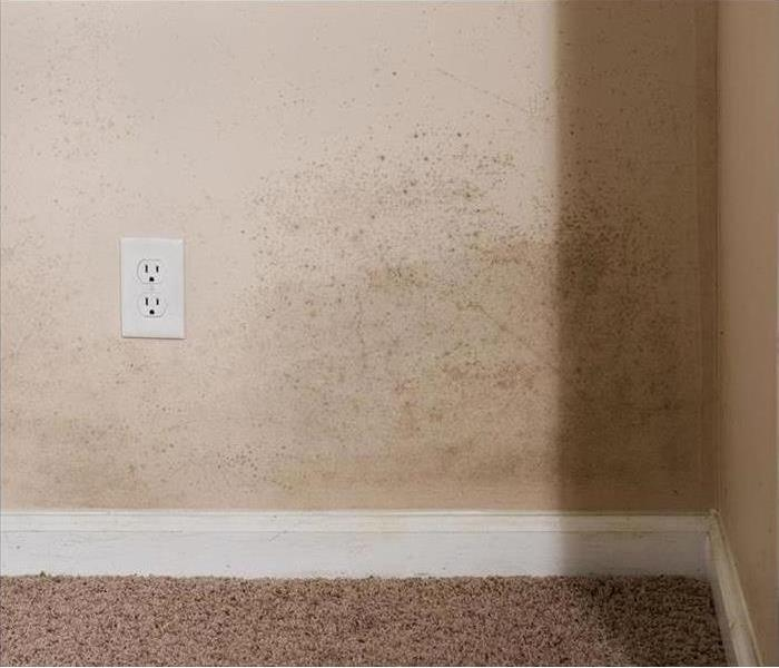 Why SERVPRO Take Mold Damage Seriously in Los Angeles