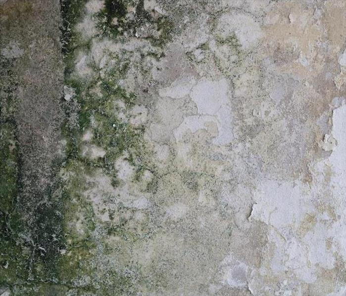 Mold Remediation How Our Professionals Can Address Mold in Your Los Angeles Residence